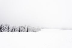 Frosted and snowy coniferous forest edge. Winter time Royalty Free Stock Photography