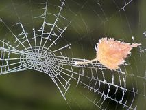 Frosted Spider Web Royalty Free Stock Photos