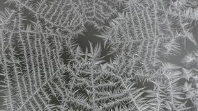 Free Frosted Spider Web On A Window Stock Photos - 107256103