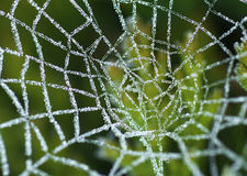 Frosted Spiders Web Stock Photography
