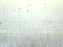 Frosted Sunlight. Late fall  early winter frosted plants Stock Images