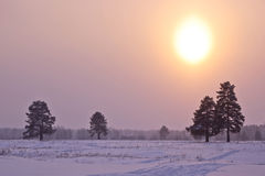 Frosted sunset. Royalty Free Stock Photos