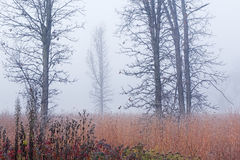 Frosted Tall Grass Prairie in Fog. Frosted autumn tall grass prairie in fog, Fort Custer State Park, Michigan, USA Stock Photo
