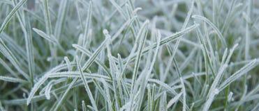 Frosted trawy zakończenie up Zdjęcia Royalty Free