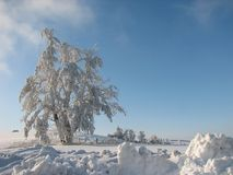 Free Frosted Tree Royalty Free Stock Image - 2074846