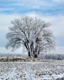 Frosted Tree Stock Photography