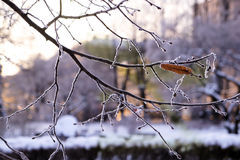 Frosted tree branch Stock Image