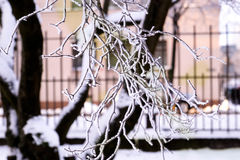 Frosted tree branch Stock Photos