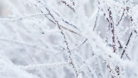 Frosted tree branches in winter pan movement. Shoot in RAW stock footage