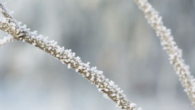 Frosted tree branches in winter slide movement. Shoot in RAW stock video