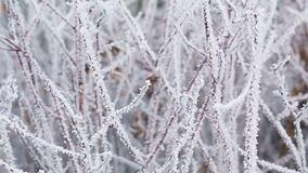 Frosted tree branches in winter slide movement. Shoot in RAW stock footage