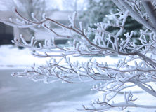 Frosted tree brunch Royalty Free Stock Photography
