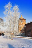 Frosted tree near the Kremlin walls in Kolomna Stock Images
