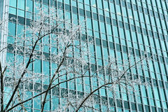 Frosted tree and an office building facade in winter Royalty Free Stock Photography