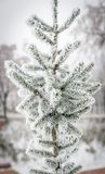 Frosted tree Stock Images