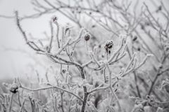 Frosted tree Royalty Free Stock Photo