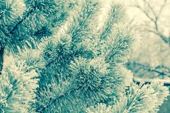 Frosted tree Royalty Free Stock Images