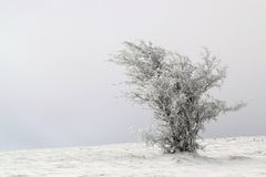 Frosted tree shaped by the wind Royalty Free Stock Photography