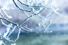 Frosted tree twig Royalty Free Stock Photos