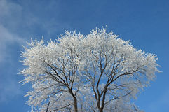 Frosted tree at winter Stock Image