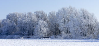 Frosted trees. Frost covered trees at the bank of a frozen lake Stock Photos