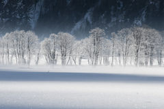 Frosted trees Stock Images