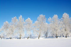 Frosted trees Stock Photos