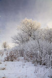 Frosted trees against a blue sky on a morning. Royalty Free Stock Image