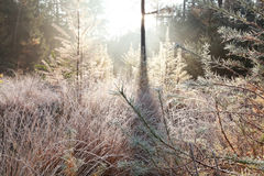 Frosted trees in autumn Royalty Free Stock Photography