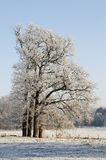 Frosted trees Royalty Free Stock Photo