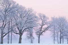 Frosted Trees at Dawn Royalty Free Stock Photo