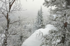 Frosted trees Stock Photography