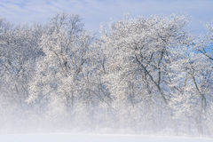 Frosted Trees in Fog Stock Photo