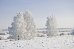 Frosted trees Royalty Free Stock Photography