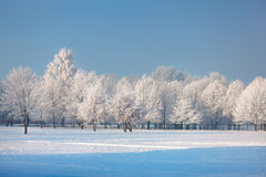 Frosted trees and grass against a blue sky Royalty Free Stock Images