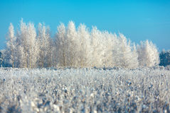Frosted trees and grass against a blue sky Stock Images