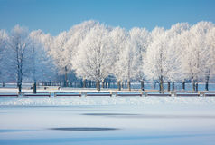 Frosted trees and grass against a blue sky Stock Photography