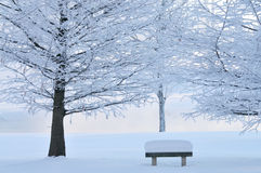 Frosted Trees and Park Bench. Winter landscape of frosted trees and park bench in light fog at sunrise on a frigid morning, Michigan, USA Stock Photos
