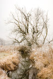 Frosted trees at the river Paar. In a landcape conservation area called Goachat, near Schrobenhausen Bavaria, Germany Stock Photography