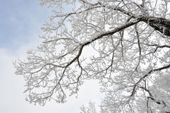 Trees in white snow. Trees frosted by snow are beautifully in white on the peak of Songhua Lake Ski Resort Stock Photography