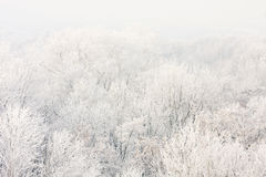 Frosted trees on a sunny morning. Royalty Free Stock Images