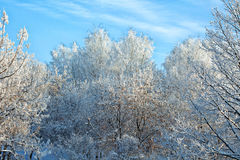 Frosted trees on sunny winter day Stock Images