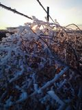 Frosted tumbleweed with sunset stock photo