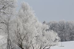 Frosted white forest. Frosted trees in winter Stock Photography