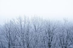 Frosted white trees in a snowy day royalty free stock photo