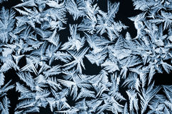 Frosted Stock Photography
