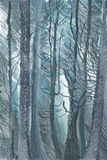 Frosted winter forest Royalty Free Stock Images