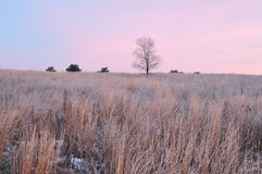 Frosted Winter Prairie Royalty Free Stock Image