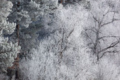 Frosted Winter Shoreline Royalty Free Stock Photography