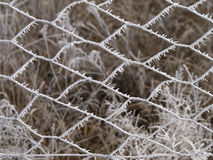 Frosted wire fence. Close-up of a wire fence outside in the garden, frosted in winter Royalty Free Stock Image